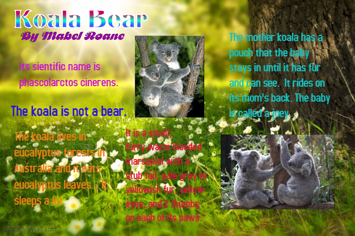 Koala Bear by Mabel