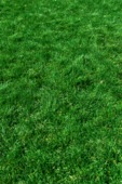 green grass poster background